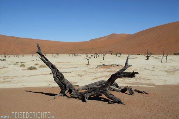 Rundreise Afrika Namibia Wüste holz