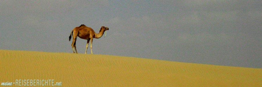 Reisebericht Kurzurlaub Dubai